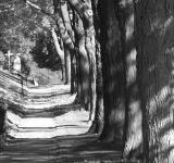 Free Photo - Trees black and white