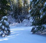 Free Photo - Snow Covered Trees