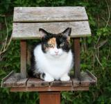 Free Photo - Cat in Birdhouse