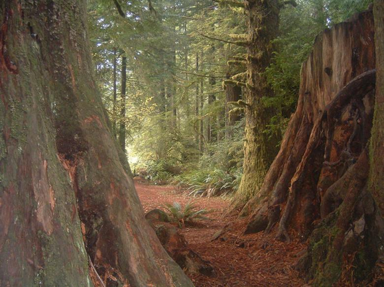 Free Stock Photo of Ancient Forest Created by timothy l. estes