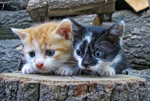 Image result for free pictures of cats