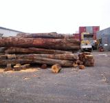Free Photo - Eucalyptus Logs