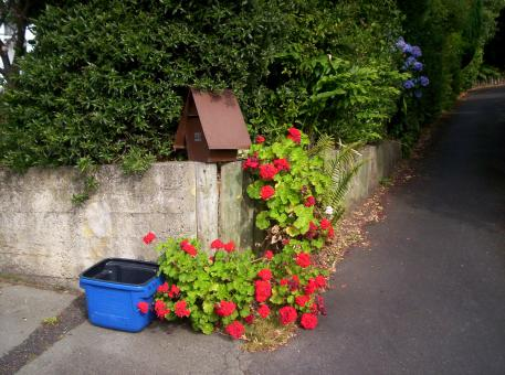 Tweed recycling Letterbox and Geraniums - Free Stock Photo
