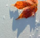 Free Photo - Frost and Leaf