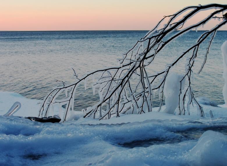Free Stock Photo of Icy Branch Created by jeff wolf