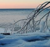 Free Photo - Icy Branch