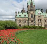 Free Photo - Ottawa Tulips