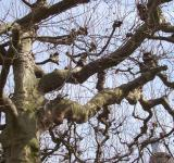 Free Photo - Play of branches