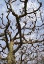 Free Photo - Play of branches II
