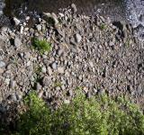 Free Photo - River Bed Textures