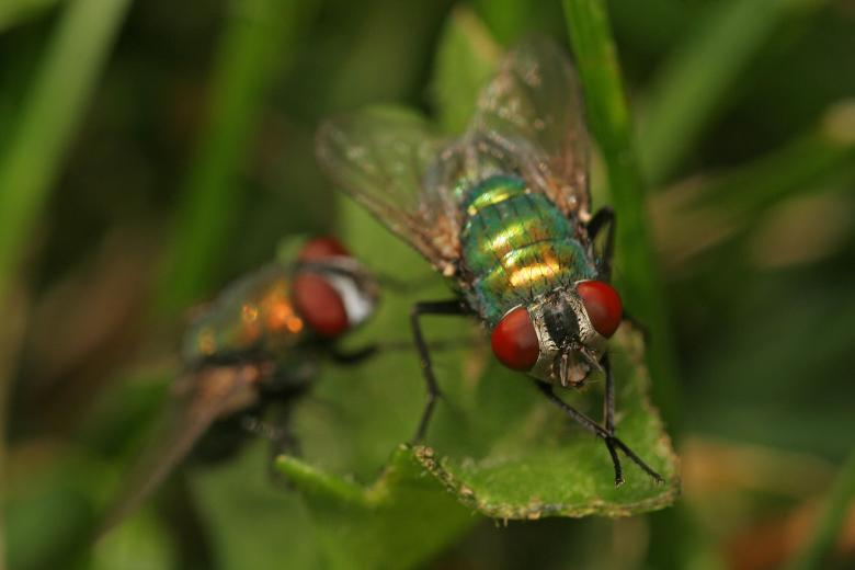 Free Stock Photo of Two Flies Created by trevor henry