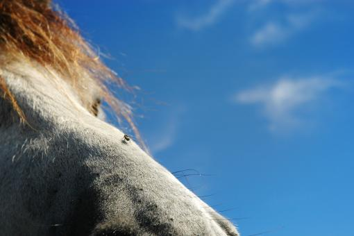 The horse and the fly - Free Stock Photo