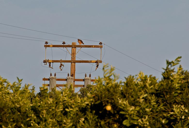Free Stock Photo of Hawk on a Pole Created by j. l. johnson