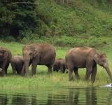 Free Photo - Herd of thirsty elephants