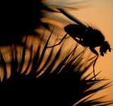 Free Photo - Sunset fly