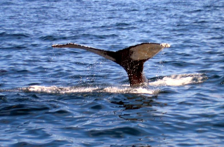 Free Stock Photo of Whale of a tail Created by deb jencks
