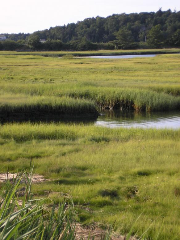 Free Stock Photo of Gloucester, MA salt marsh Created by deb jencks