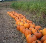 Free Photo - Pumpkin patch