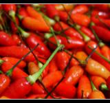 Free Photo - Pepper Philippine Style