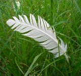 Free Photo - Feathergreen