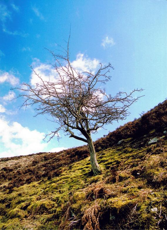 Free Stock Photo of Bare Tree Created by neil heslop