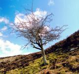 Bare Tree - Free Stock Photo