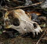 Free Photo - Animal Skull in the Wild