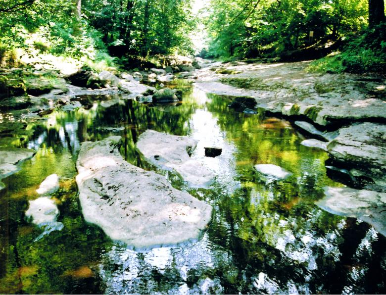 How Stean Gorge - Free Forest Stock Photos