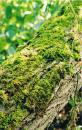 Free Photo - Mossy Tree