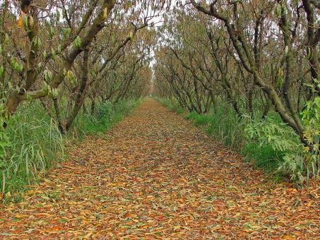Orchard in the Fall - Free Stock Photo