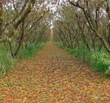Free Photo - Orchard in the Fall
