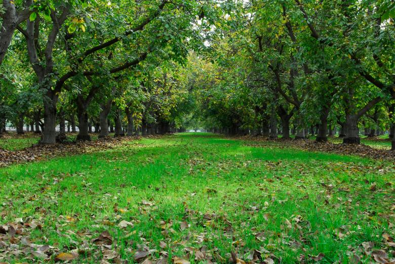 Free Stock Photo of Row of Trees, Leaves, & Green Grass Created by j. l. johnson