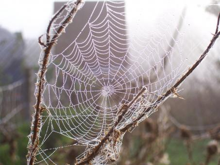 Cobweb - Free Stock Photo