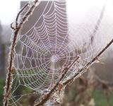 Free Photo - Cobweb