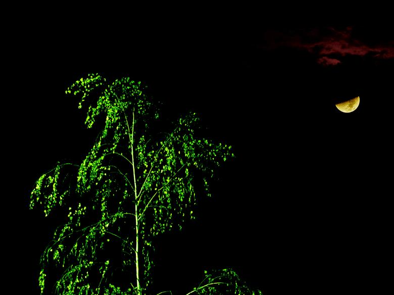 Free Stock Photo of Martian Tree Illuminated by Moonlight Created by j. l. johnson