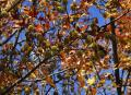 Free Photo - Winter's Tree (Close-up Color Versi