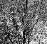 Free Photo - Winter's Tree