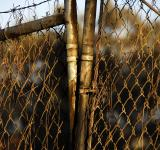 Free Photo - Corroded & Rusted Chain-Link Fence
