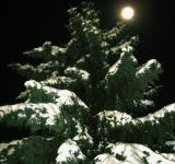 Free Photo - Tree in the night