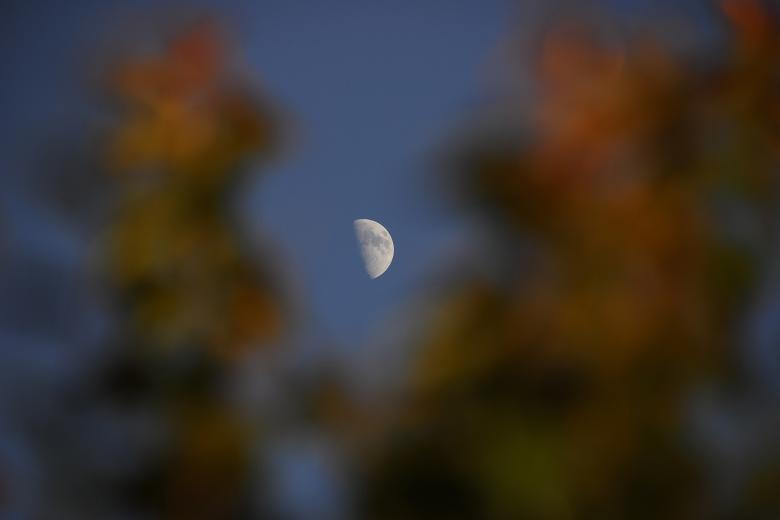 Free Stock Photo of 5 PM Moon through the Leaves of a Tree Created by j. l. johnson