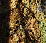 Free Photo - Pine Tree Sprouts