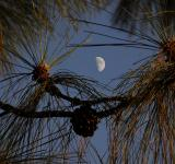 Free Photo - Half Moon at Dusk