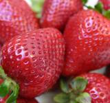 Free Photo - Strawberry