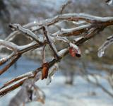 Free Photo - Ice Coating