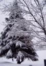 Free Photo - Snow tree