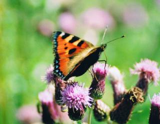 Download Butterfly Free Photo