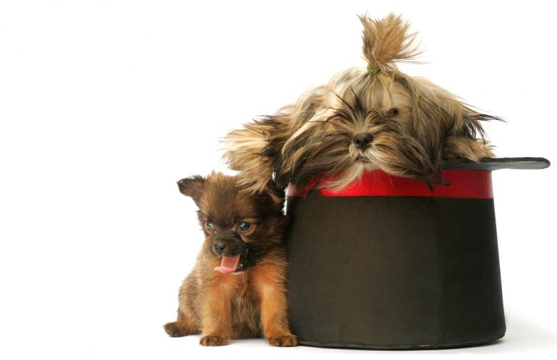 Toochie and Poochie - Free Dog Stock Photos