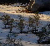 Free Photo - Baby Pine Forest in Sequoia National Par