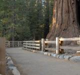 Free Photo - General Sherman Tree Path in Sequoia Nat