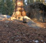 Free Photo - Forest Floor in Sequoia National Park